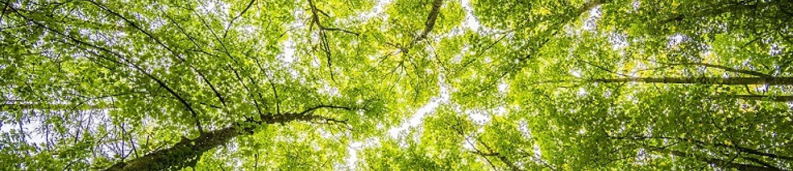 PSR 2014/2020. Misura 8.6. Finanziamento a fondo perduto fino al 40% per le tecnologie forestali e la trasformazione, movimentazione e commercializzazione dei prodotti delle foreste.