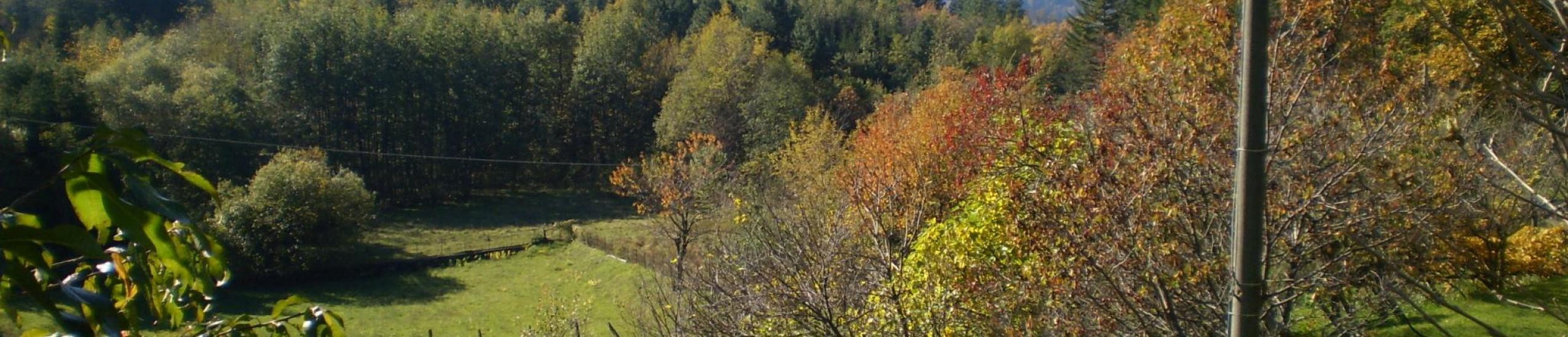 Vista panoramica del bosco e dei prati
