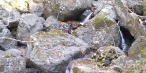 Tratto di corso d'acqua