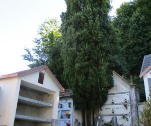 Cimitero di Cavorsi (1)