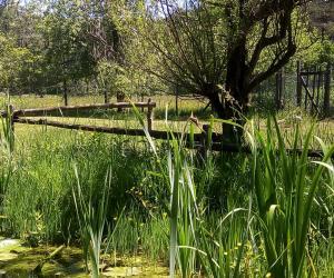 area protetta provinciale giardino botanico di pratorondanino 5