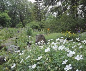 area protetta provinciale giardino botanico di pratorondanino 1