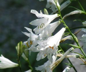 area protetta provinciale giardino botanico di pratorondanino 2