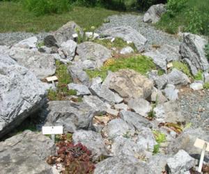 area protetta provinciale giardino botanico di pratorondanino 4