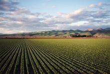 Finanziamento a fondo perduto per la conversione e il mantenimento dell'agricoltura biologica. Anno 2021.